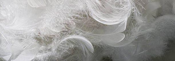 plumas de ganso para rellenos nordicos
